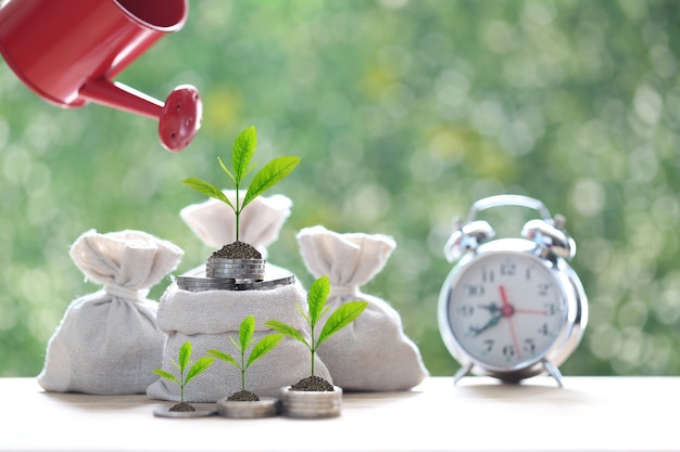 Woman hand holding watering can with plant growing on coins money in the bag on natural green background, interest rates and business investment concept