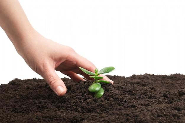 地面に若い緑の芽を持つ女性の手。