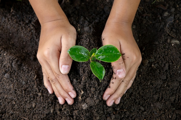 Woman hand planting young tree on black soil.close up.world environment day.earth day concept
