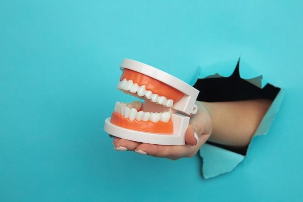 파란색 종이 벽에 찢어진 구멍에서 턱의 모델을 보여주는 여자 손. 치아 관리 개념.