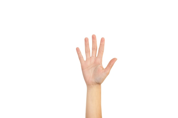 Woman hand showing her palm and five fingers on a white background