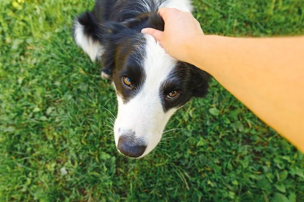 여자 손 여름 정원 또는 도시 공원 야외에서 강아지 보더 콜리를 쓰 다듬어.