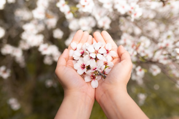 Woman hand touching almond blossoms tree flowers. cherry tree with tender flowers. amazing beginning of spring. selective focus. flowers concept.