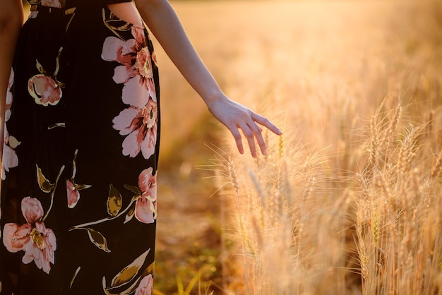 Woman hand touching ripe golden barley or wheat ear at sunset