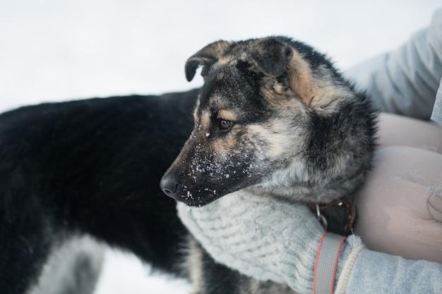 冬の森で雑種犬を抱きしめる女性の手。閉じる
