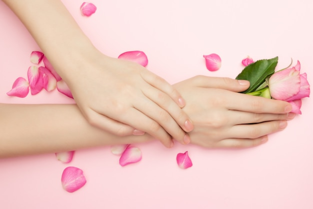The woman hands hold rose flowers on a pink background. cosmetics for a sensitive skin care. natural petal cosmetics, anti-wrinkle hand care.