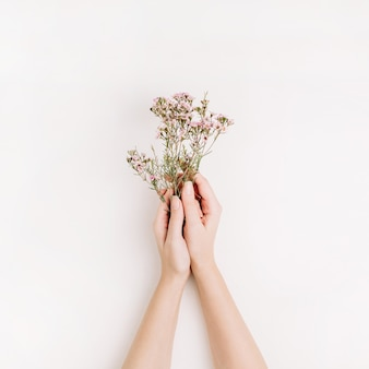 Woman hands hold wild flowers on white background. flat lay, top view