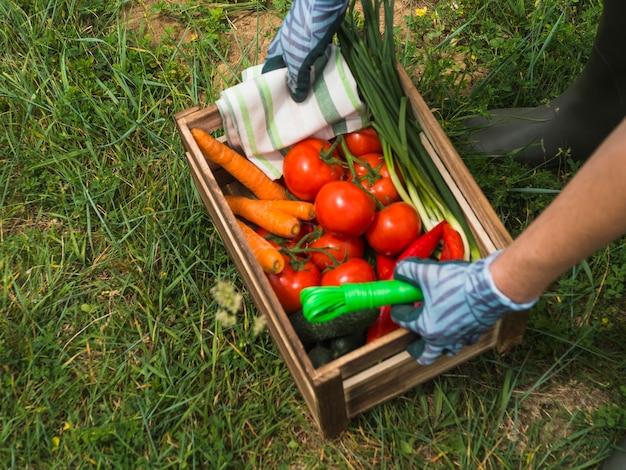 新鮮な有機野菜とクレートを持っている女性の手