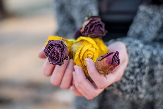 Woman hands holding dried red and yellow roses flowers
