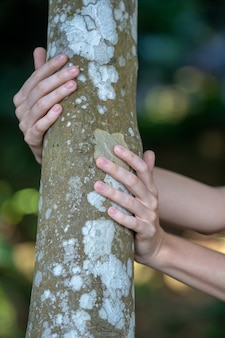 Woman hands holding and hugging tree bark and tree trunk to feel closer to nature