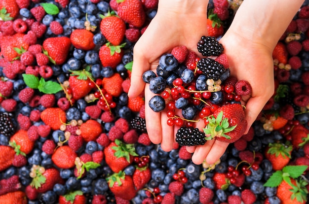 Woman hands holding organic fresh berries against the background of strawberry, blueberry, blackberries, currant, mint leaves.