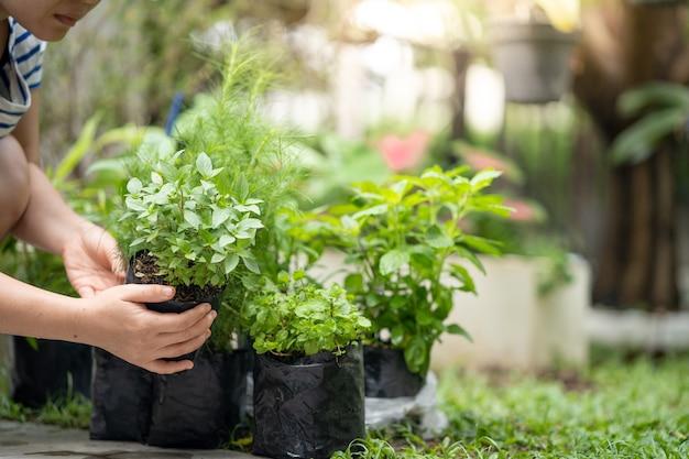 야채 식물을 들고 정원에서 식물을 준비하는 여자 손