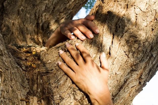 Женщина руки обнимает ствол дерева на открытом воздухе