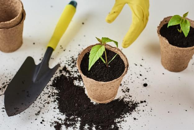 女性は植物をめっきする黄色の手袋で手します。植物ケアのコンセプト