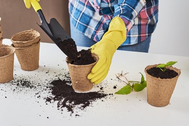 여자는 노란색 장갑 공장 transplating에 손을. 식물 관리 개념