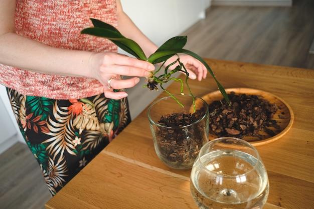 家に花を植える女性の手