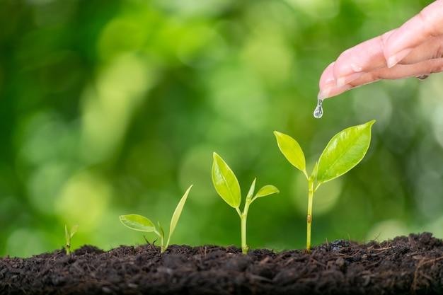 若い緑の植物を植え、水をまく女性の手