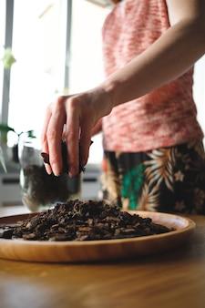 Mani della donna che piantano un fiore nella casa
