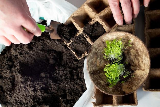 여자 손 심기 식물 꽃 콩나물 토양에