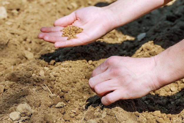 여자 손 파종 씨앗. 여성 손 봄 땅에 파종 씨앗