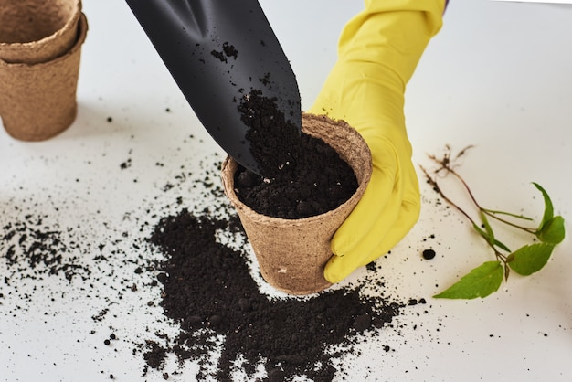 Woman hands in yellow gloves transplanting plant