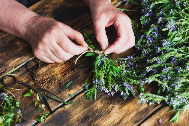 Woman harvests herbs in the winter for tea, drying useful plants.