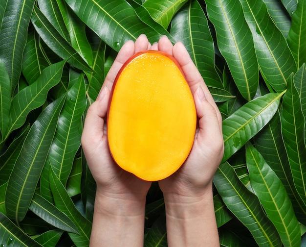 Женщина держит разрезанное свежее сочное красивое манго над зелеными листьями