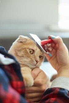 Женщина держит британский рыжий кот и расчесывает его шерсть, самка заботится о домашнем животном дома при дневном свете.