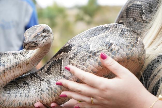 그녀의 팔과 손에 큰 뱀을 들고 여자