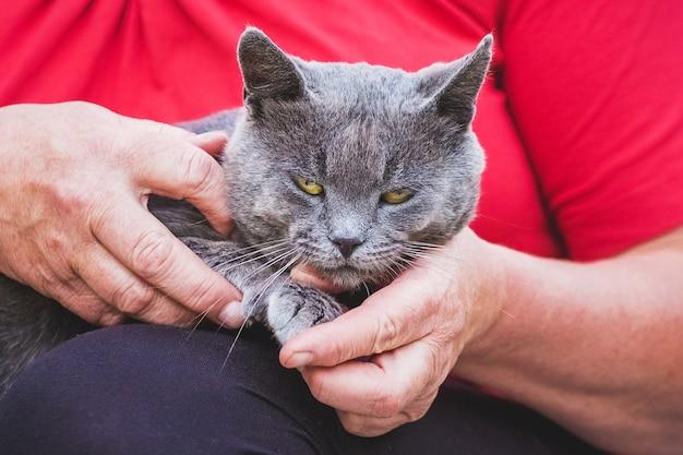 Женщина держит серую кошку на руках.