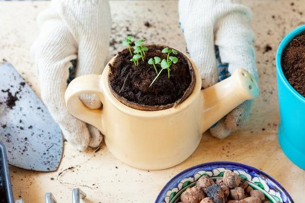 芽を手に鍋を持っている女性。ガーデニングのコンセプト