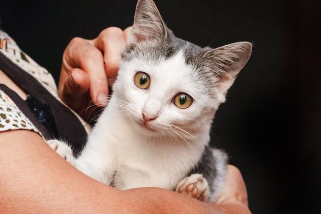 彼女の腕に小さな猫を保持している女性