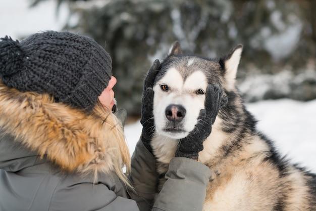 冬の森で愛を込めてアラスカンマラミュートの顔を保持している女性。閉じる。