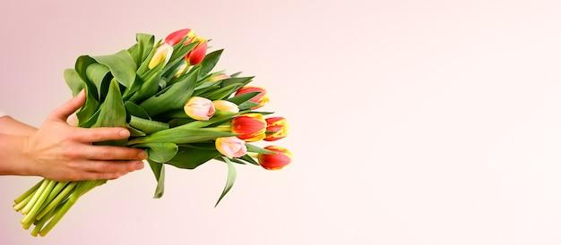 ピンクの背景、クローズアップで美しい春のチューリップを保持している女性。テキスト用のスペース。