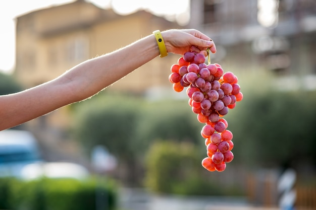 A woman holding big cluster of red juicy grapes in her hand.