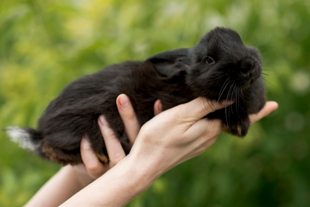 Woman holding a black rabbit