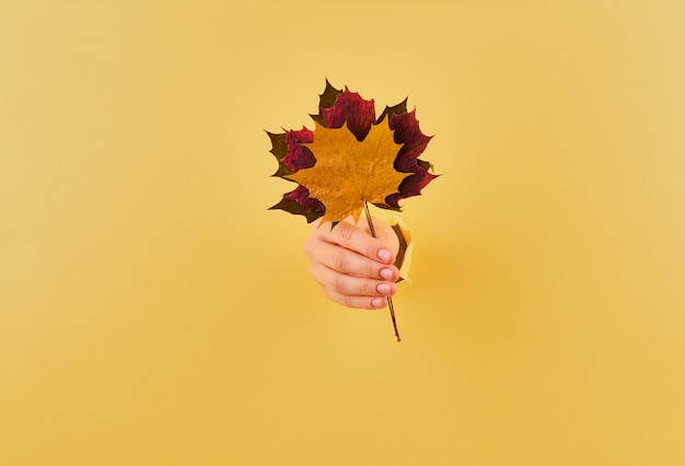 Woman holding a bouquet of fall leaves on yellow background copy space