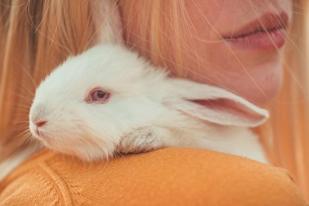 Woman holding cute fluffy rabbit, closeup. cute bunny.