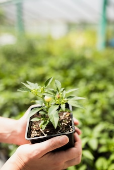 Woman holding flowerpot in greenhouse