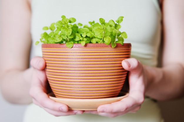 Woman holding flowerpot with sprouts in her hands