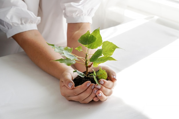 A woman holding a green plant in palm of her hand. close up hand holding a a young fresh sprout. shallow depth of field with focus on seedling.