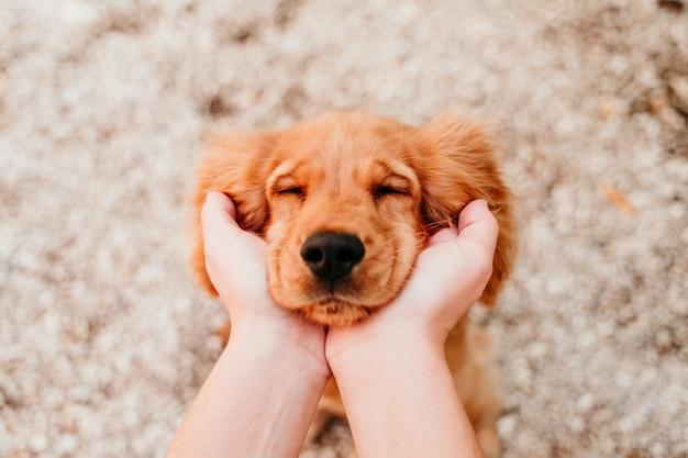 귀여운 강아지 코 커 발 바리 강아지의 머리를 잡고 여자. 동물 개념에 대한 사랑