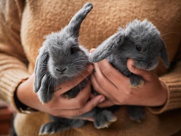 彼女の手に小さな灰色のウサギを持っている女性、クローズアップ