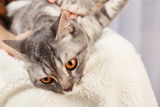 素敵な灰色の猫を抱いた女性、クローズアップ