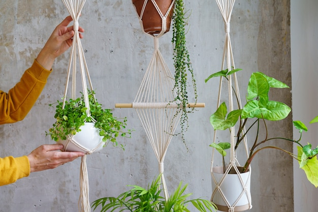 Woman holding macrame plant hanger with houseplant over grey wall