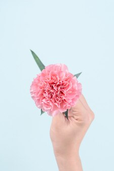 Woman holding pink carnation over blue table background