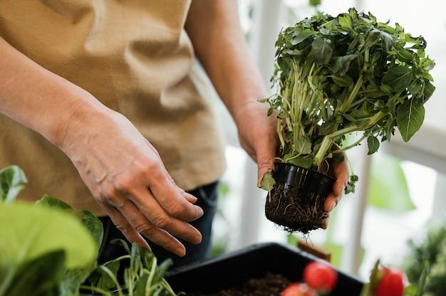 Donna che mantiene vaso per piante al chiuso