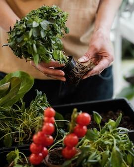 外部の根を持つ植木鉢を保持している女性