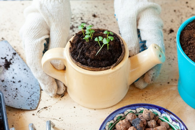Woman holding a pot with a sprout in her hands. gardening concept