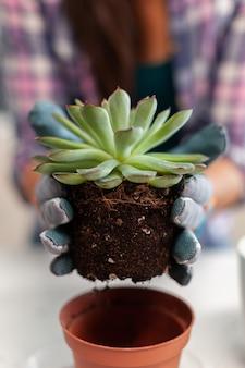 Donna che tiene una pianta succulenta seduta sul tavolo in cucina